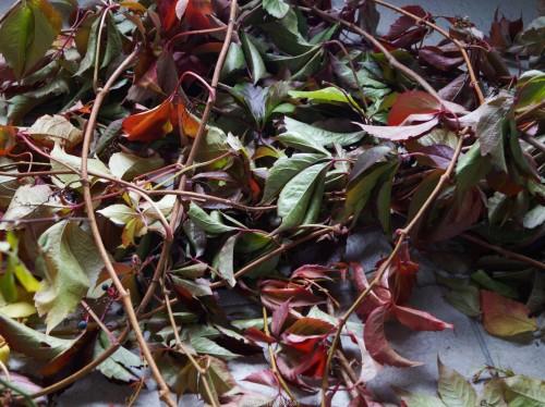 DIY Herbstkränze (1 von 6)